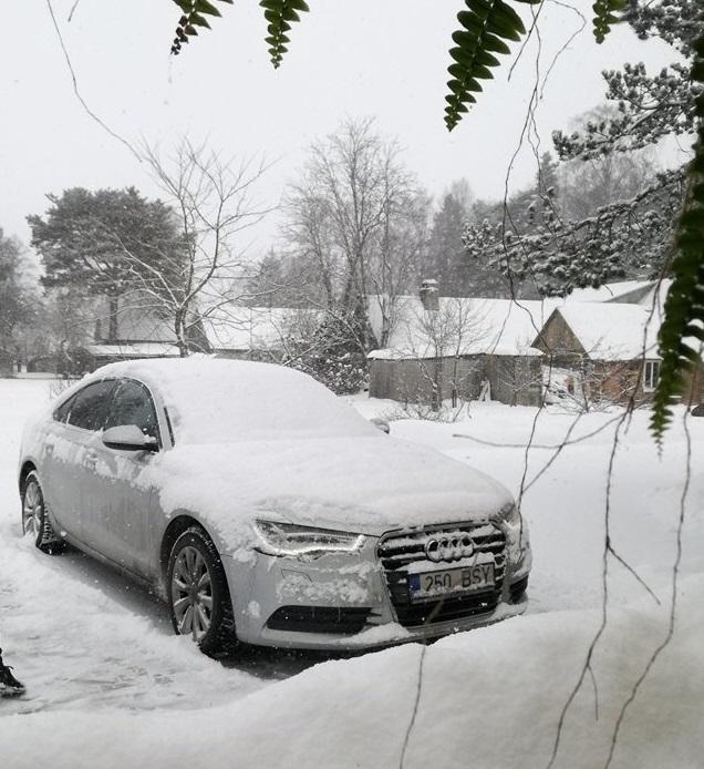 https://www.upload.ee/image/8426283/snow.jpg
