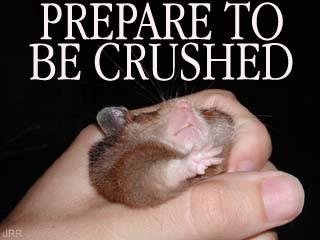 Belittle-CrushedGerbil.jpg